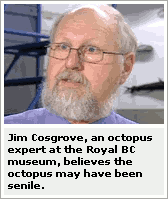 CTV: 'Jim Cosgrove, an octopus expert at the Royal BC museum, believes the octopus may have been senile.'