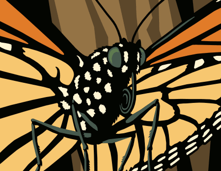 Monarch butterfly detail