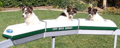 Puppies riding a minimonorail. Photo credit: James Horecka, known Monorailist