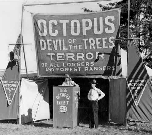 'OCTOPUS: DEVIL OF THE TREES'